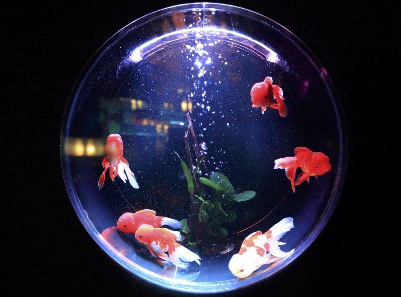 wichtige Faustformeln für Aquarien und Teiche